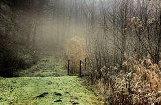 """Dr. Pálffy István  """"Zöld út"""" február felé  Januári hideg, ködös nap a Vértesben, de ez a zöld út jelzi a túlélést a tavaszba. Több kép Istvántól: www.facebook.com/palffydr/photos_albums Nap, Country Roads, Facebook"""