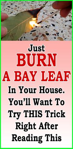 Just Burn A Bay Leaf In Your House. You'll Want To Try This Trick Right After Reading This The post Just Burn A Bay Leaf In Your House. You'll Want To Try This Trick Right After & appeared first on Wedding. Burning Bay Leaves, Motivation Yoga, Endocannabinoid System, Thinking Day, Group Boards, Medicinal Plants, Yoga Quotes, Dance Quotes, Music Quotes
