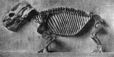 Endothiodon uniseriesskeleton, specimen 5618