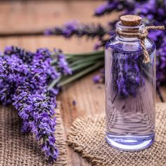 Buy Lavender oil by grafvision on PhotoDune. Lavender oil in a glass bottle on a background of fresh flowers Essential Oil For Boils, Essential Oils For Cancer, Essential Oils For Inflammation, Lavender Oil For Sleep, Home Remedies For Bloating, Best Oil Diffuser, Oils For Sleep, Oregano Oil, Frankincense Oil