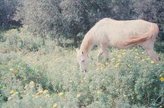 horse - meadow - spring - flowers :)