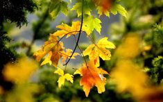 The top 7 trees for autumn leaves in your garden Autumn Day, Autumn Trees, Autumn Leaves, Fall, Maple Tree, Autumn Garden, Beautiful Gardens, Garden Design, Colours