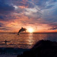 Las Fotos Mas Alucinantes: fotos de delfines