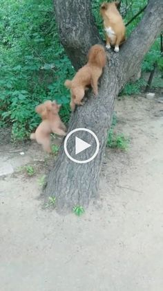 Funny Cats And Dogs, Cute Cats And Kittens, Kittens Cutest, Cute Dogs, Pet Cats, Funny Animal Videos, Cute Funny Animals, Cute Baby Animals, Funny Videos