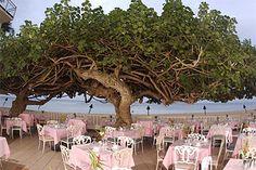 Hau Tree Lanaii Restaurant, Hawaii