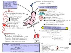 Newborn Nursing Assessment