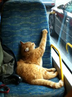A commuter chilling on a bus in London is Bob the Cat.