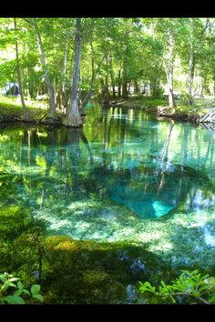 Turquoise Pool, Ginnie Springs, Florida So many beautiful places to see. Florida Springs, Florida Usa, Florida Moving, Florida Trips, Gainesville Florida, Florida Camping, South Florida, Dream Vacations, Vacation Spots