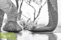 TOP 10 FINALIST: Help us chose by letting us know which photo is YOUR favourite! The photo with the most likes wins a luxury safari at Find the other top entries Photo Competition, South Africa, Tuesday, Safari, Wildlife, Elephant, Let It Be, Night, Luxury
