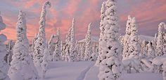Pallas - Yllästunturin kansallispuisto - Luontoon.fi Snow And Ice, Winter Beauty, Winter Snow, Winter Wonderland, The Good Place, Natural Beauty, Wildlife, Scene, Forests