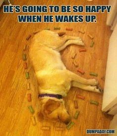 Funny Dog Photo: This pic was so good that the dog rewrote the caption.