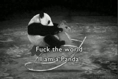 panda rocking photo, this picture was uploaded by denistephenson. Browse other panda rocking pictures and photos or upload your own with Photobucket free image and video hosting service. Niedlicher Panda, Cute Panda, Panda Funny, Happy Panda, Tiny Panda, Baby Animals, Funny Animals, Cute Animals, Baby Pandas