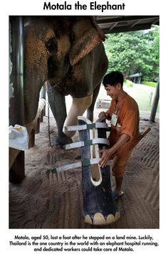 cool-animal-protethics-elephant-leg