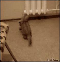 Kangaroo Kitten...love kittens