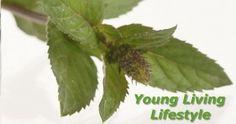 Hier sind die besten Pfefferminz Rezepte für den heißen Sommer! Young Living Essential Oils, Peppermint, Plant Leaves, Herbs, Plants, Beauty, Summer, Recipies, Mint