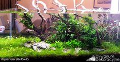 90x45x45 Project aquarium