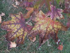 #otoño #hojas secas #parque #árboles