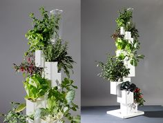 """""""Home Farming in the City""""  Maya Golan, a graduate of the Industrial Design- modular growing system suitable for small spaces, built and with an economical irrigation system.."""
