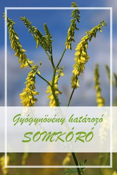 Herbalism, Herbs, Therapy, Plant, Herbal Medicine, Herb, Medicinal Plants