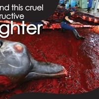 Kenichiro Sasae, Japanese Ambassador to the United States: Save the Dolphins From Slaughter and Captivity