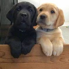 Two adorable pups!