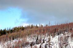 Spring vs Winter Siberia