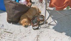 Meet a Lowcountry Dog: Ashley