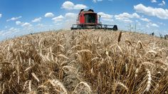 Ukraine's bid for closer ties with the west could come at a cost. With the IMF set to loan the country $17 billion, the deal could also see GMO crops grown in some of the most fertile lands on the continent, warns Frederic Mousseau. Very few, not...