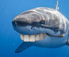 Sharks with people teeth assured