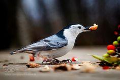 Bird and nut by Andre_Villeneuve via http://ift.tt/2kHsP2Q