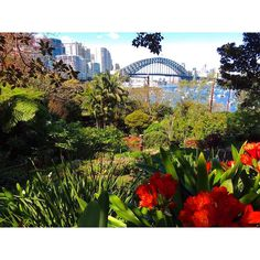 The Secret Garden  A hidden beauty just down the road..not so secret anymore thanks to ABC #secretgarden #lavenderbay #wendywhiteley #beautifuldestinations #northsydney #sydneyharbourbridge #sydney #garden #abc by mel_nearcz http://ift.tt/1NRMbNv