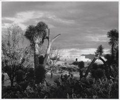 Paul Strand, Near Saltillo, Mexico (1933), via Artsy.net