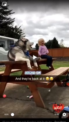 The best duet - Funny Kids Funny Vid, Funny Dog Videos, Funny Animal Memes, Cute Funny Animals, Funny Animal Pictures, Cute Baby Animals, Funny Cute, Funny Dogs, Funny Baby Memes