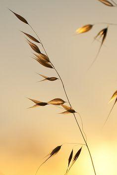 Sunlit | Flickr - Photo Sharing!