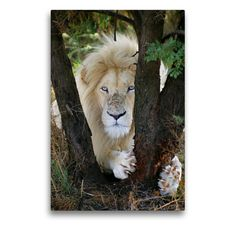 Artworks, Lion, Portraits, Wall Art, Animals, Color, Africa, Canvas, Animales