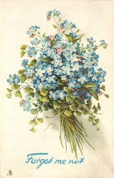 blue forget-me-nots in a bunch with string tied around bottom, leafy foliage included, stems right
