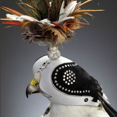 If It's Hip, It's Here: Formal Falconry. Tiroler Goldschmied's Exclusive Diamond-studded Hawk's Hoods in Abu Dhabi.