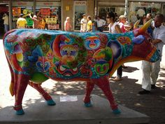 Cow parade in Costa Rica