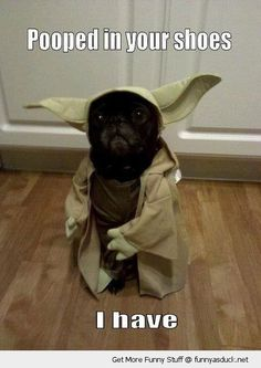 star wars yoda dog animal pooped shoes funny pics pictures pic picture image photo images photos lol