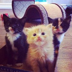 Are you gonna be our new friend?  via @EmrgencyKittens
