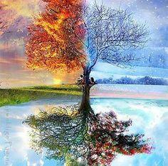Herfst, winter, lente, zomer