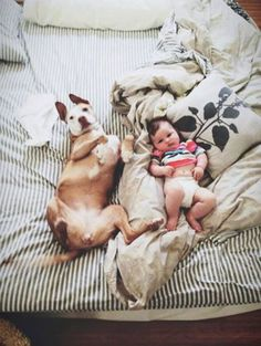 GOOD MORNING IN AMERICA #yummypets #animals #pets #baby #dog #pup #puppy #home #cute yummypet.com