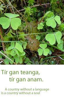 Irish language- Gaelic is the language I would most like to learn. Irish Sayings, Irish Quotes, Gaelic Words, Celtic Nations, Irish Proverbs, Irish Language, Irish People, Irish Eyes Are Smiling, Irish Pride