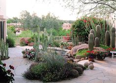 It would be fun to use the large cacti to make a 'family' (dad, mom, little girl, and kitty) in the rock garden.