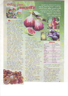 Good Health Tips, Natural Health Tips, Health And Beauty Tips, Ayurvedic Tea, Ayurvedic Recipes, Nutrition Tips, Health And Nutrition, Health Care, Feng Shui Plants