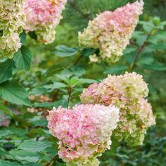 Herbaceous Border, Plantation, Back Gardens, Perennials, Beautiful Flowers, Landscape, Garden Ideas, Google, Gardens