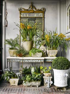 Indoor Vertical Gardening Tips and Ideas Organic gardening isn't always about food to eat. Some people enjoy growing flowers and other forms of plant life as well. Garden Shop, Home And Garden, The Garden Room, Elle Decor, Plant Decor, Preston, Houseplants, Garden Inspiration, Container Gardening