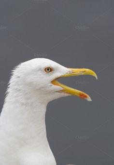 Seagull by De todo un poco on Creative Market