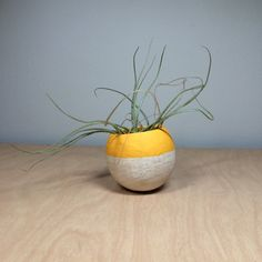 Air Plant Pod - yellow