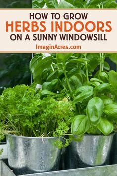 Most herbs are easier to care for than houseplants, and they provide fresh foliage to flavor meals. Plant a windowsill herb garden and enjoy fresh herbs year around. Read on to learn how to setup, plant, and grow herbs indoors on a sunny windowsill. Herb Garden Kit, Herb Garden Design, Easy Garden, Vegetable Garden, Potager Garden, Herbs Garden, Garden Bar, Garden Boxes, Garden Planters